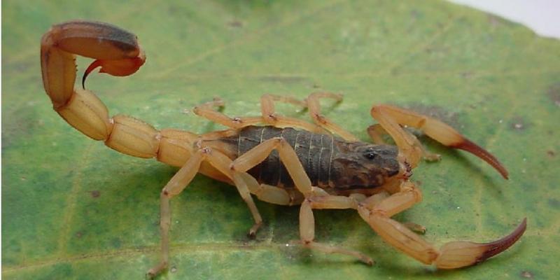 Biólogo alerta para os perigos com o contato com o animal