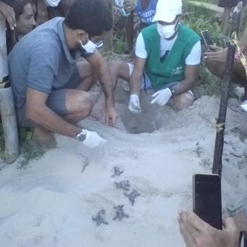 Cem tartarugas nascem nessa quarta em Enseada dos Corais