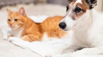 Bolsonaro cria pasta para gerir política pública para Pets