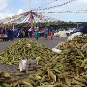 Plantão de milho no Ceasa começa nesta segunda-feira (15)