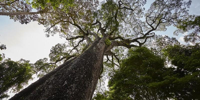 A justificativa do levantamento é com o objetivo de potencializar a gestão e a conservação dos recursos naturais