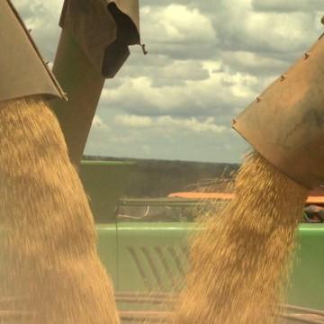 Conab registra comercialização de milho superior a 6 toneladas para pequenos criadores do Estado