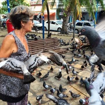 Projeto de Lei pretende considerar o pombo uma praga humana