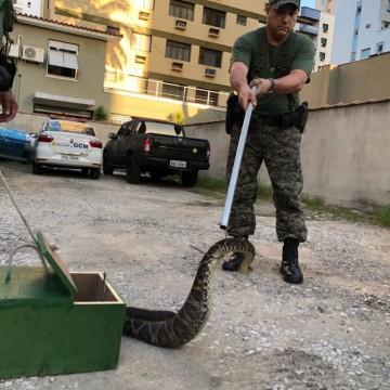 O aparecimento de animais exóticos no meio urbano