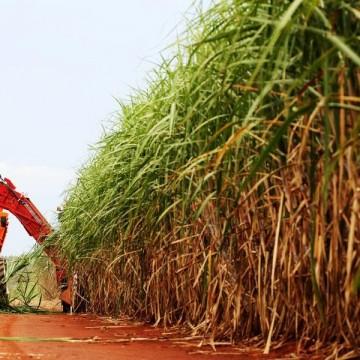 Safra da cana de açúcar deve aumentar 6% em relação a 2019