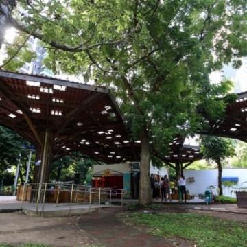 Com manutenção de ações, arborização deve aumentar no Recife