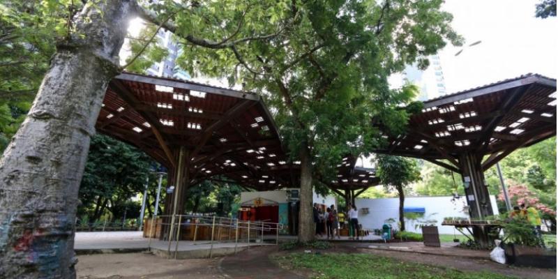 Em 2019, mais de onze mil árvores foram plantadas na capital pernambucana