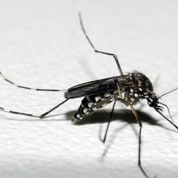 PE tem a primeira morte por chikungunia e casos de dengue avançam