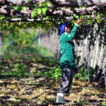 Programa Força Local investe R$ 2,5 mi em cadeias produtivas do Estado