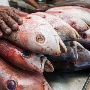 Projeto Pesca de Valor emite Selo de Segurança para Pescados da Colônia Z-10 em Itapissuma