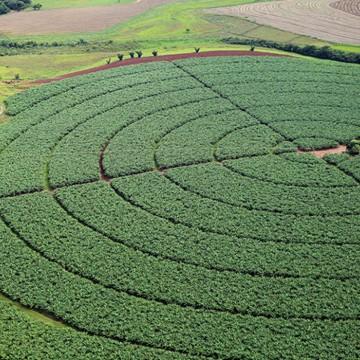 Governo publica novas regras para registro de defensivos agrícolas