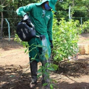Suape começa a reflorestar mais 61 hectares da Mata Atlântica