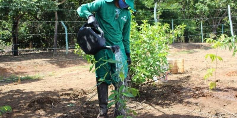Também há a previsão de restauração de outros 200 hectares da Zona de Preservação, onde foram já foram plantadas mais de 300 mil mudas