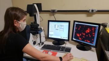 UPE pesquisa remédio para cura do Covid-19