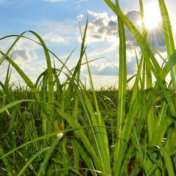 Auxílio Emergencial: Feplana solicita inclusão do produtor rural