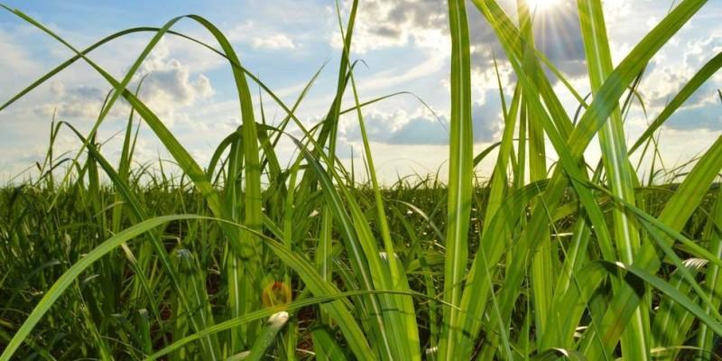 Presidente da Federação ressalta  que o cenário mundial trouxe impactos negativos para o setor da cana de açúcar, que estava começando a se recuperar