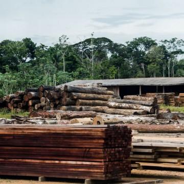 Classificação de madeira pode beneficiar consumidor, diz ministério