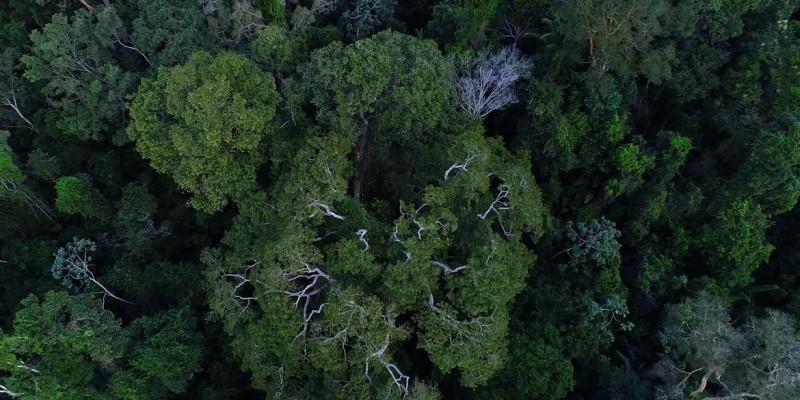 Avisos de desmatamento caem 21% nos últimos 6 meses
