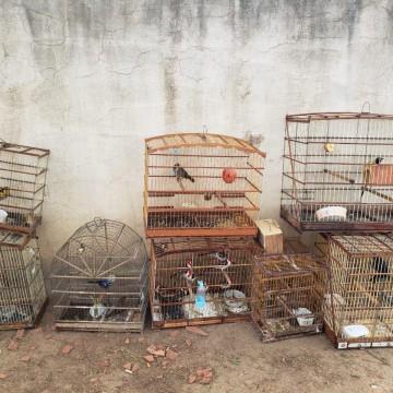 Operação de combate a crimes ambientais resgata 60 animais silvestres na feira da Boa Vista em Caruaru