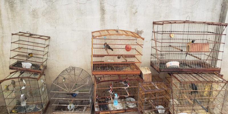 As aves foram soltas em uma reserva ecológica no município