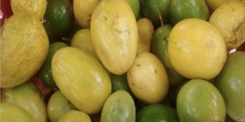 Maracujá é uma das frutas que passam a ser beneficiadas pelo programa