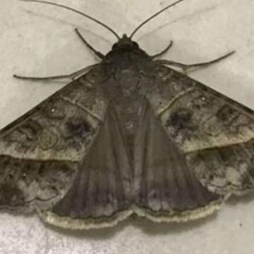 Em hospital, mariposa é comparada ao manto de Nossa Senhora e motivo de reza