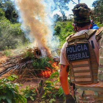 Operação erradica mais de 500 mil pés de maconha no Sertão pernambucano