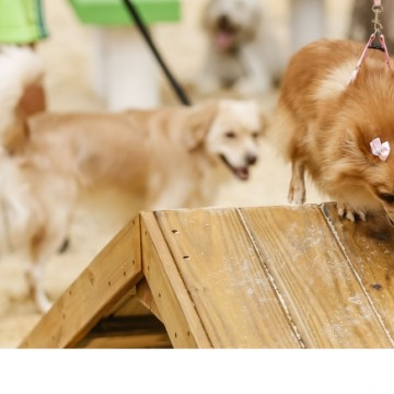 Bairro da Imbiribeira vai receber área de lazer para cachorros