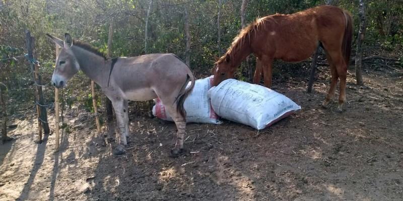 De acordo com a corporação, no local, eram vendidas carnes de cavalos e jumentos