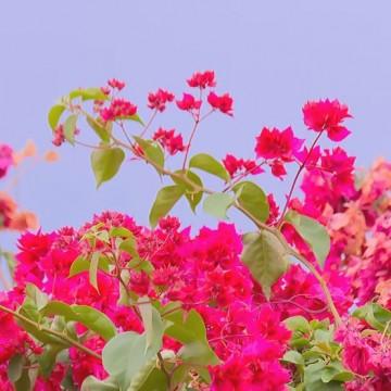 Chegada da Primavera traz períodos mais secos para regiões do estado