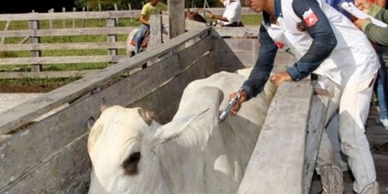 Agência de Defesa e Fiscalização Agropecuária do Estado de Pernambuco (Adagro) apresenta resultados da vacinação
