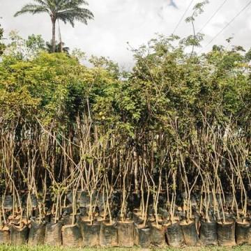 Jardim Botânico do Recife abre viveiro florestal para visitação neste domingo (4)