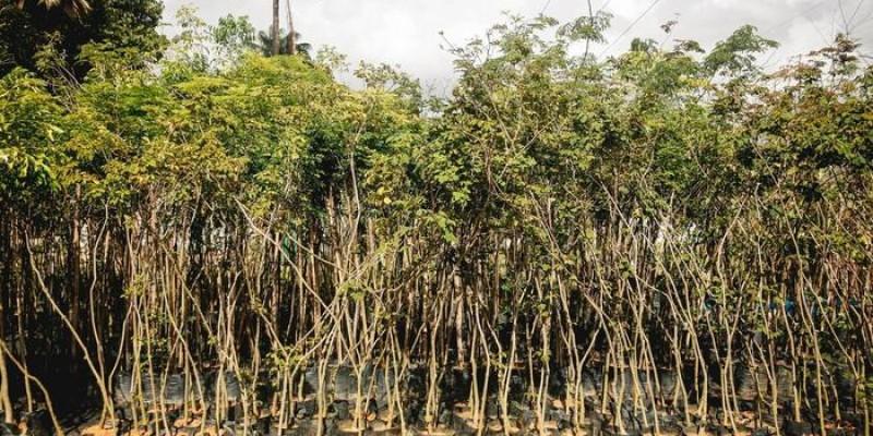 O objetivo do passeio para a visitação é conscientizar a população a respeito da importância de conservar o meio ambiente e respeitar a natureza
