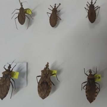 Secretária de Saúde investiga surto de doença de Chagas no Estado