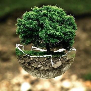 No Dia 5 de Junho é celebrado o dia da Ecologia, Dia Nacional da Reciclagem e Dia Mundial do Meio Ambiente