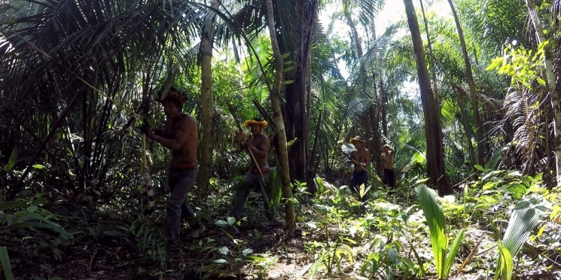 Os encaminhamentos são acompanhados também pelo Instituto Brasileiro do Meio Ambiente e dos Recursos Naturais Renováveis (Ibama), a Fundação Nacional do Índio (Funai) e a Polícia Federal (PF)