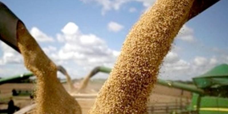Receita agrícola com a produção de grãos e culturas perenes deve chegar a R$ 787,9 bilhões - um salto de 53% sobre 2020