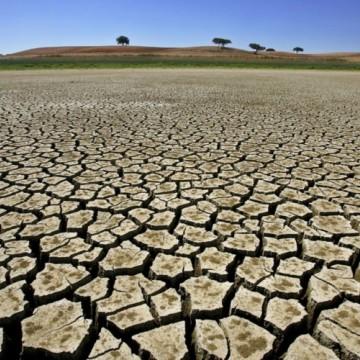 Sedic reconhece situação de emergência por seca em 61 cidades do Agreste