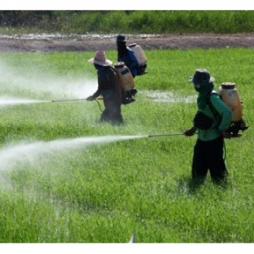 CBN Sustentabilidade: Agrotóxicos