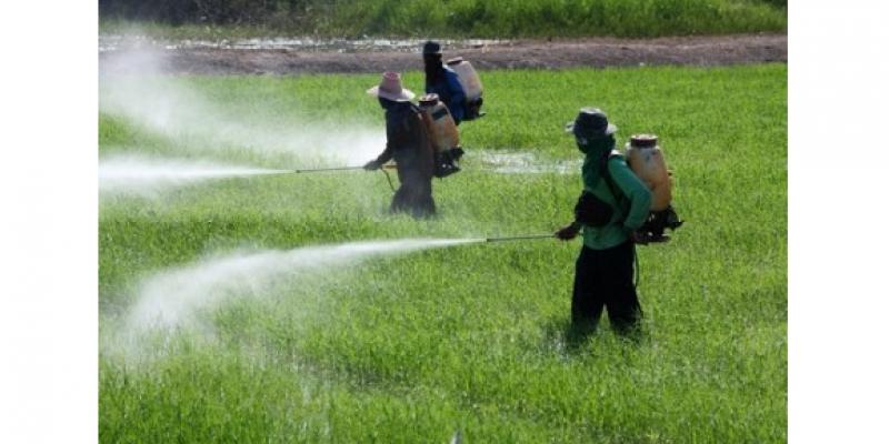 Uma ótima opção para evitar o consumo de vegetais e verduras com agrotóxicos é ter horta orgânica em casa