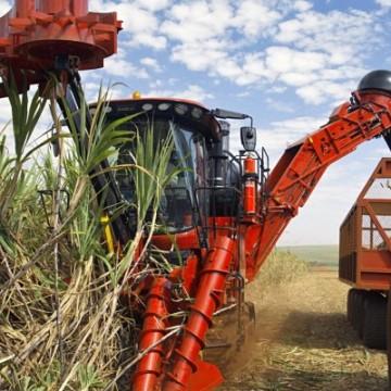 Pouca chuva provoca queda na produção de açúcar no estado
