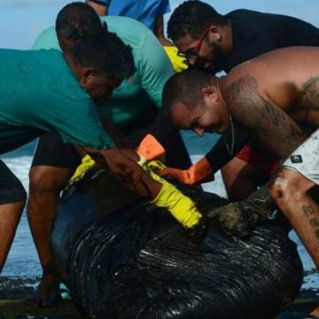 Pernambuco recolhe 257 toneladas de óleo das praias do Litoral Sul