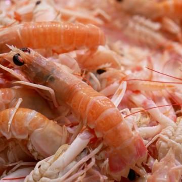 Criadores de camarão apostam em retomada