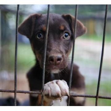 Senado pode aprovar lei que proíbe o sacrifício para o controle dos animais de rua