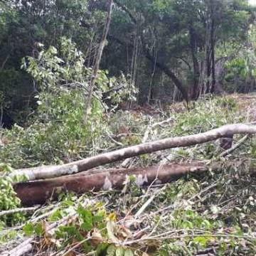 Fiscalização de desmatamento atua contra infratores em Abreu e Lima