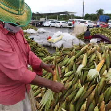 Venda de milhos no Ceasa ultrapassa números de 2020 durante o período junino