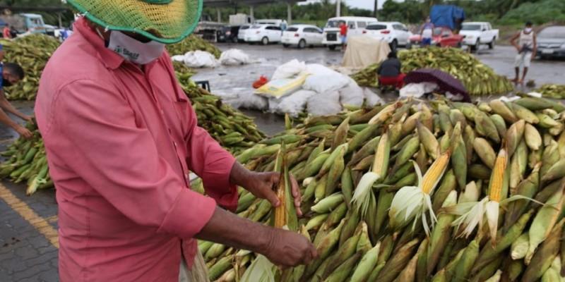O plantão já está em prática desde dia 14 de junho para atender a demanda na compra do milho