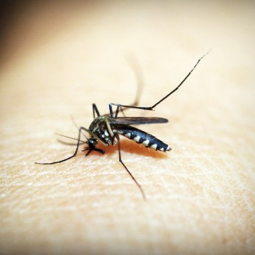 Recife tem alta de infestação pelo Aedes Aegypti