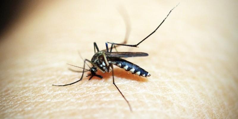 O mosquito pode transmitir chikungunya, dengue e zika. Recife já notificou este ano 20.491 casos suspeitos de arboviroses