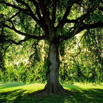 Dia da árvore e a importância da preservação ambiental